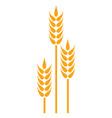 golden wheat logo vector image