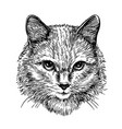 hand drawn portrait of cute cat sketch art vector image vector image