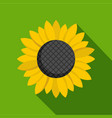 sunflower seed icon flat style vector image
