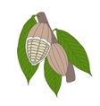 Cocoa beans on a white background vector image vector image