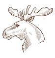 moose or elk canadian symbol animal with horns vector image