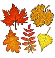 Set of autumn leaves - maple aspen oak and rowan vector image