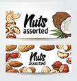 banner design with coconut cashew peanut vector image