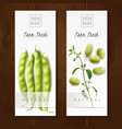 green beans realistic banners vector image vector image