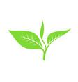 tea leaf vector image vector image