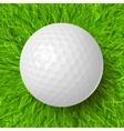 golf ball on grass vector image