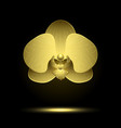 golden stylized orchid vector image vector image