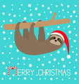 merry christmas sloth sitting hanging on branch vector image