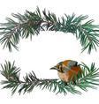postcard with bullfinch on the fir tree vector image