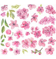 watercolor pink flowers vector image vector image