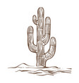 cactus tree in desert wild plant with spikes or vector image