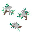 cute koala bear climbing on eucalyptus tree vector image
