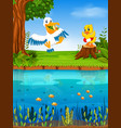 cute pelican and duck in the river vector image vector image