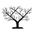 espaliered fruit tree vector image vector image