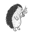 hedgehog smoking pipe sketch vector image