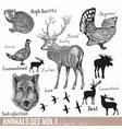 set hand drawn detailed forest animals vector image