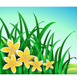 A garden with big yellow flowers vector image vector image