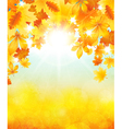 Autumn sun vector image