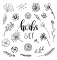 floral and herbal set vector image