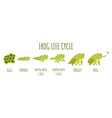 frog life cycle stages development and growth vector image vector image