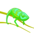 green chameleon on brown branch vector image vector image