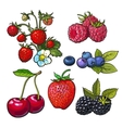 Strawberry blueberry blackberry cherry raspberry vector image