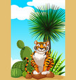 tiger sitting in cactus garden vector image vector image
