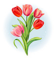 watercolor red and pink tulip bouquet vector image