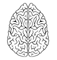 brain top vector image vector image