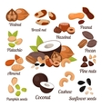 Different nuts collection vector image vector image
