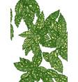 plant aucuba vector image vector image