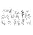 set leaves branches and flowers vector image vector image