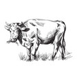 sketches of cows drawn by hand vector image vector image