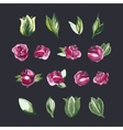 Watecolor Floral Set of Design Elements Including vector image