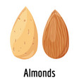 almonds icon cartoon style vector image vector image