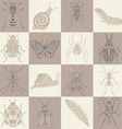 Insects squares on brown shades in a checkerboard vector image vector image