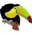 toukan vector vector image