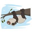 Panda on a tree vector image
