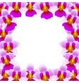 vanda miss joaquim orchid border vector image vector image
