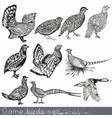 set of detailed hand drawn game birds vector image
