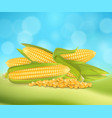 sweet corn advertising poster design vector image