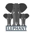 elephant flat vector image
