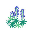 lupine flat purple meadow vector image