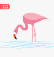 one adult pink flamingo walking on water isolated vector image vector image