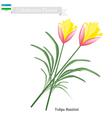 Tulipa Batalinii Flowers Flower of Uzbekistan vector image vector image