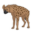 color with spotted hyena vector image vector image