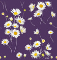 floral seamless pattern with chamomile flowers vector image