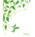 Abstract green leaves and hummingbirds background vector image vector image