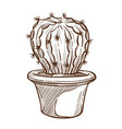 cactus plant in pot sketch indoor flower with vector image vector image
