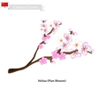 Meihua or Plum Blossom A Popular Flower in China vector image vector image